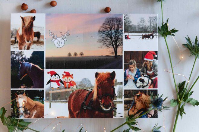Pferde-Adventskalender Schoko